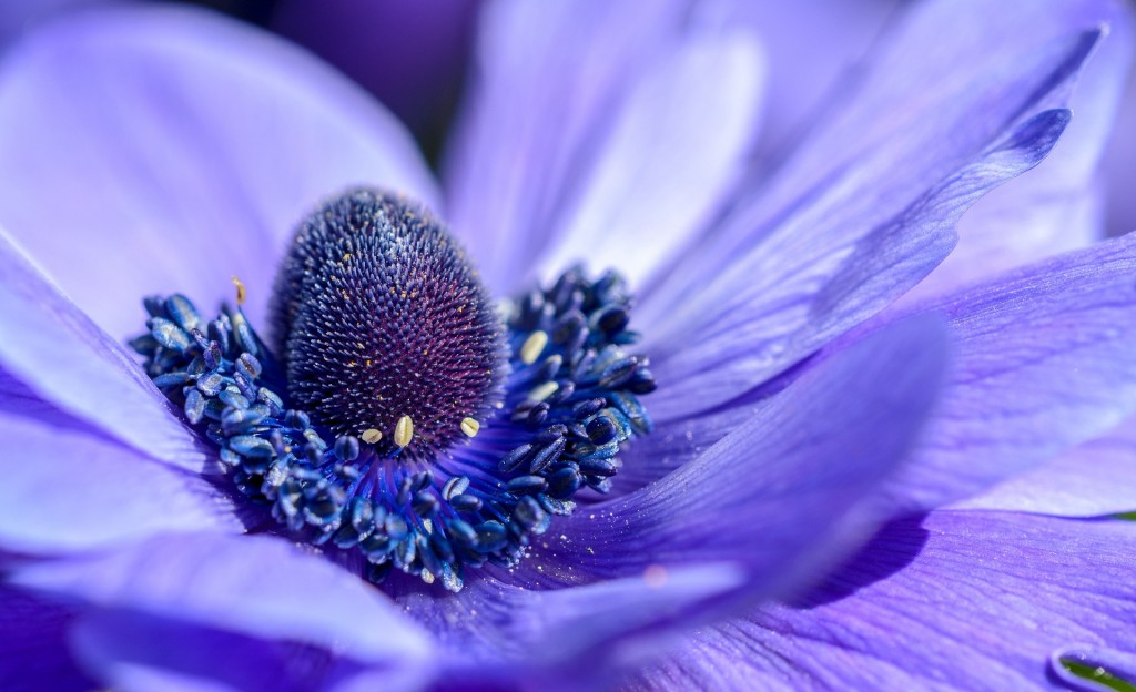 色のもつイメージ 青紫