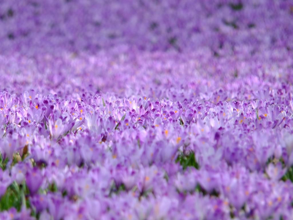 色の持つイメージ 紫色