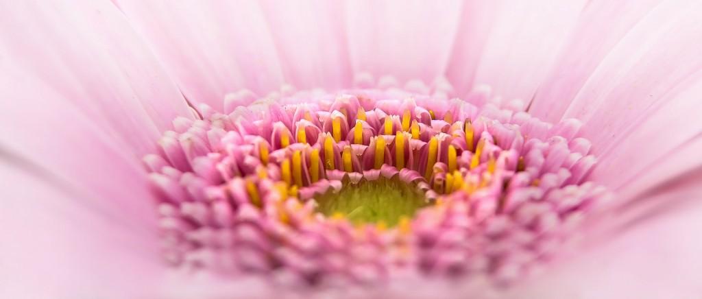 色のイメージ ピンク